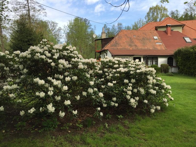 zahrada 3.JPG